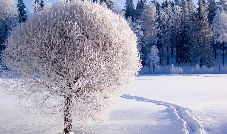 дерево, снег, winter, armenia, иней, красивый