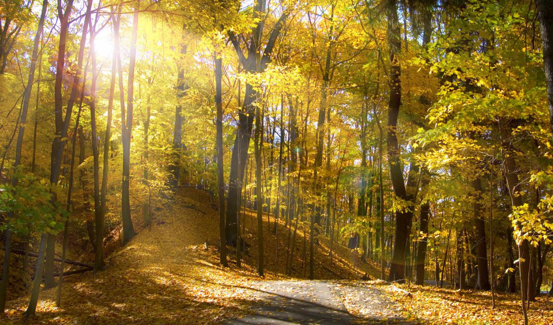 вышивки, осенний, лес, light, схемы, деревья, пейзаж, rays, wallpaper, throughout, forest, предпросмотр, оригинал, крестом, вышивка, авторы, хомяк,