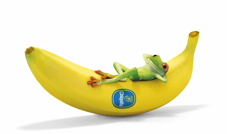 banana, dreamies, free, download, frog, deine, datenschutz, bildercommunity, agb, kostenlose, impressum, regeln, startseite, funny,