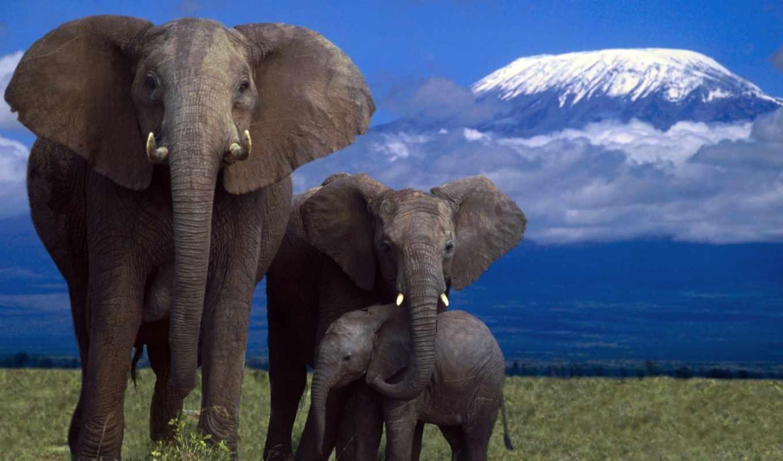 слон, zhivotnye, слоны, слонов, african, семья, нашей, коллекция, форматы, everything,