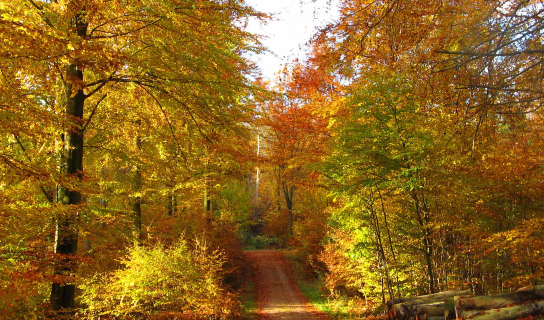 осень, дорога, картинка, природа,
