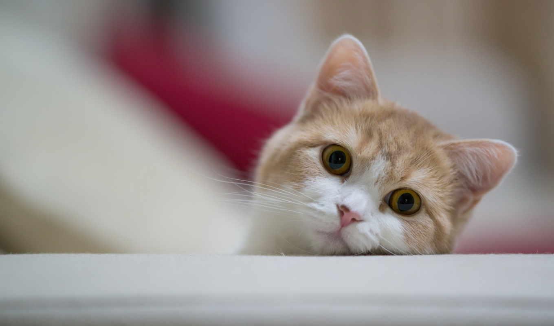 кошаки, кот, кошек, better, вконтакте, feel, кошки,