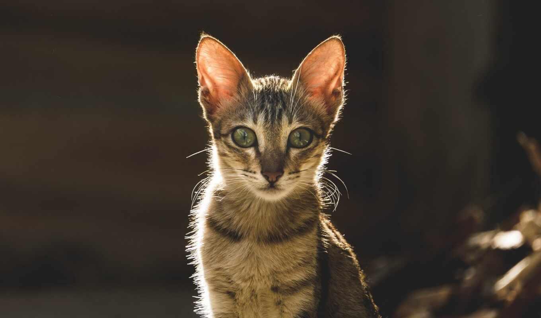 кот, музыка, dream, amazon, relaxmycat, зелёный, ручей, purchase, cd, сегодня, adiphotography