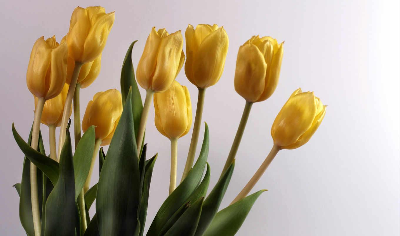 amarillas, flores, девушек, красивые, fotos, easter, imágenes, красивых, подборка, лом,