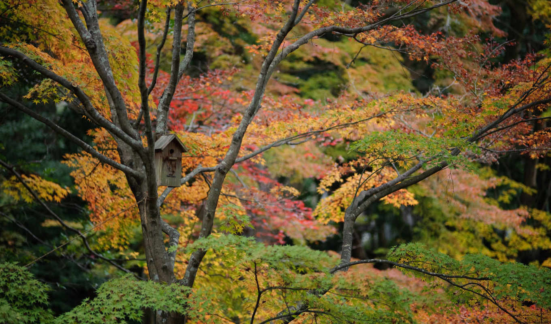 осень, forests, япония, листья, красивые, mushrooms, more, free,