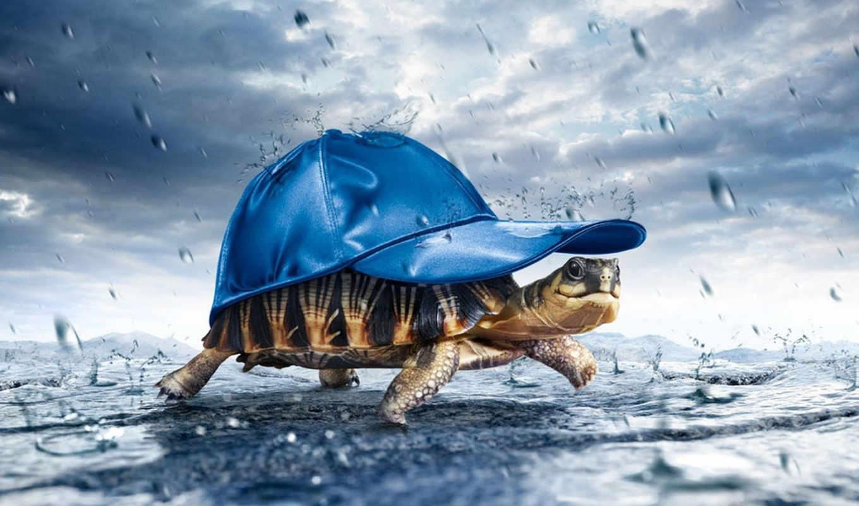 черепаха, под, дождь, дождем, кажется, loading, собирается, животные,