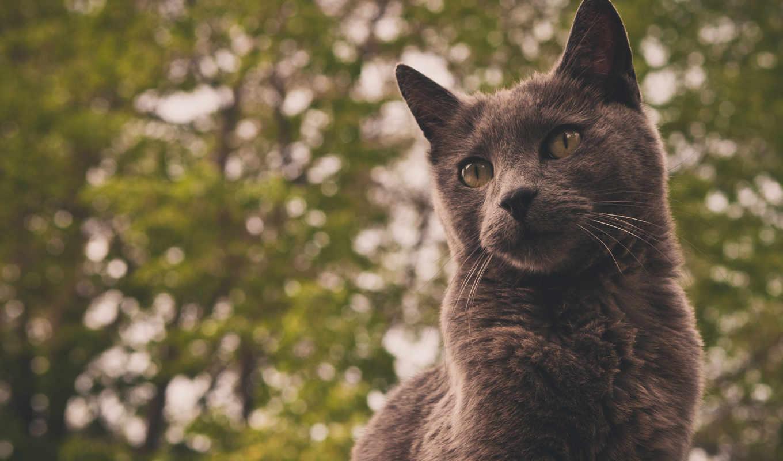 кот, серый, фон, eyes, gris, fridge, магнит, animales,