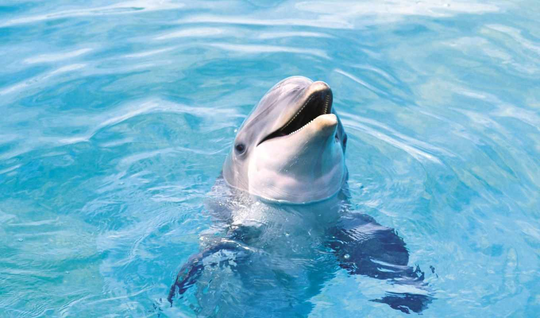 wallpaper, дельфин, dolphin, животные, as, нравится,