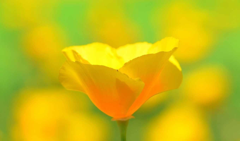 earth, flower,