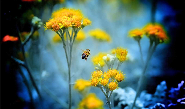 macro, цветы, пчела, マクロ,