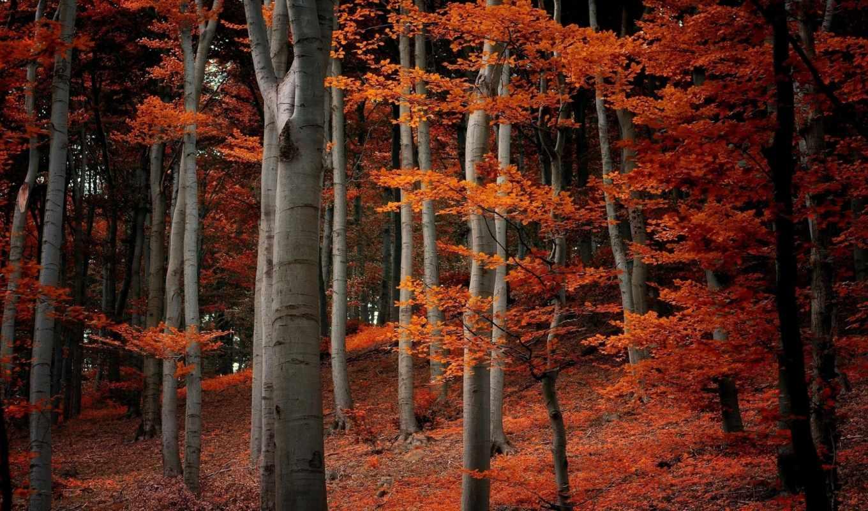листья, осень, природа, trees, пасть,