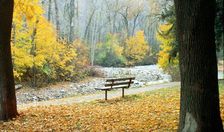 красивый, осень,