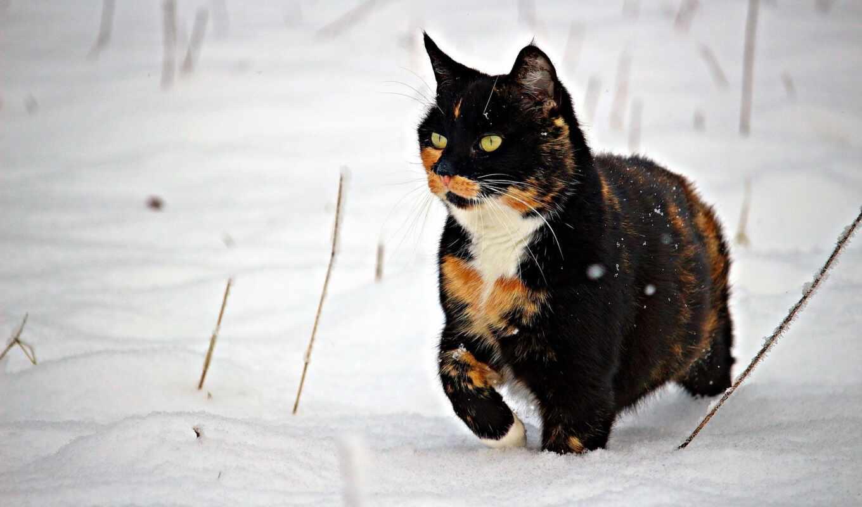 кот, white, браун