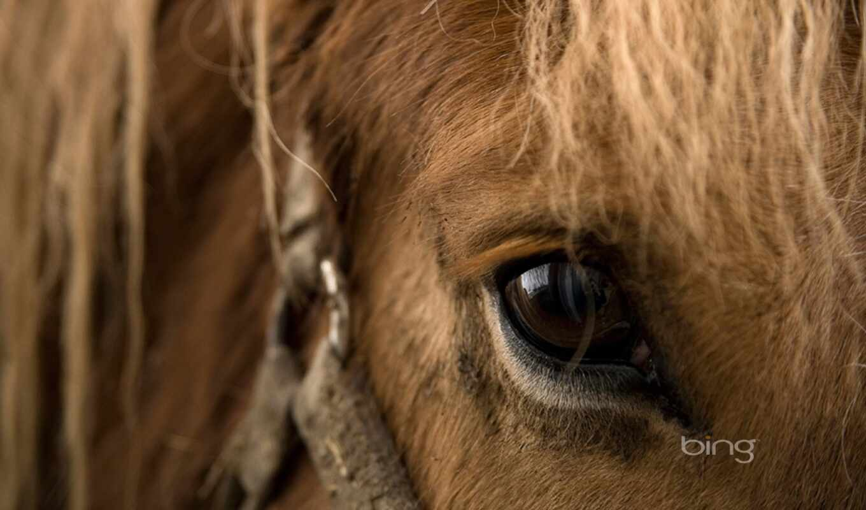 лошадь, fond, cheval, австралия, глаз