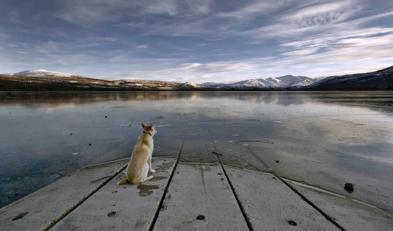 озеро, собака, кнопкой, правой, горы, выберите, животные, мыши, изображение, разрешением, вода, картинку, одиночество, небо, плиты,