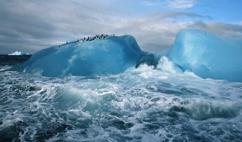 iceberg, южные, острова, сандвичевы, интересно,