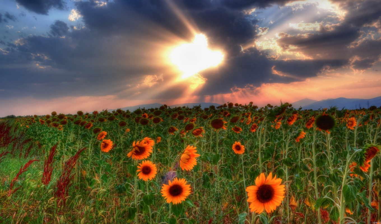 поле, небо, природа, hdr, пейзаж, тучи, подсолнухи, закат, облака, твоих, صور, الصورة, душа, столетий, фотографии,