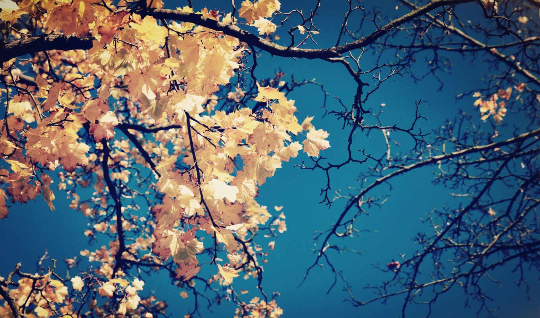 ветки, листья, природа, небо, дерево, желтые, крона, осень, mtv, electronics, mystery, lw, black, клен,