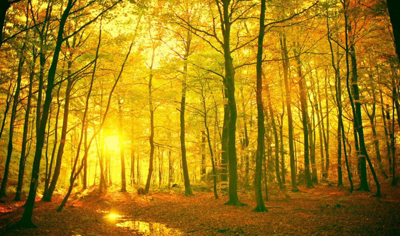 природа, деревья, солнце, лес, листья, картинка, пейзаж, дерево,