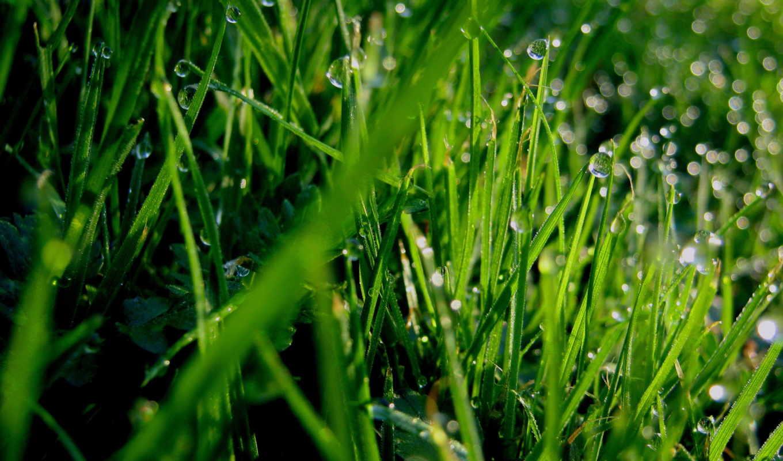 трава, фон, роса, save,