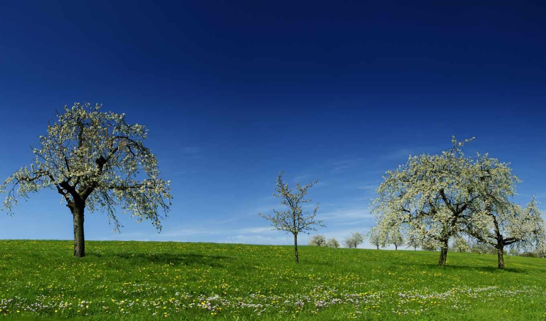 landscape, зелёный, trees, природа, popular, free, landscaping,