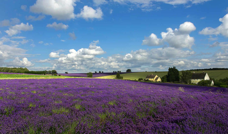 цветы, небо, lavender, луг, облака, cotswold, деревья, пейзажи -, поле, house,