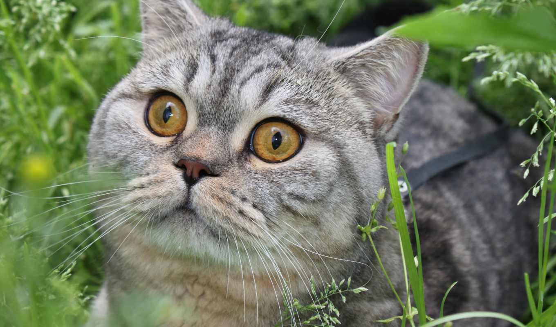 разрешениях, кошки, смотрит, разных, кот, дома, мб, количество, солнца, серый,
