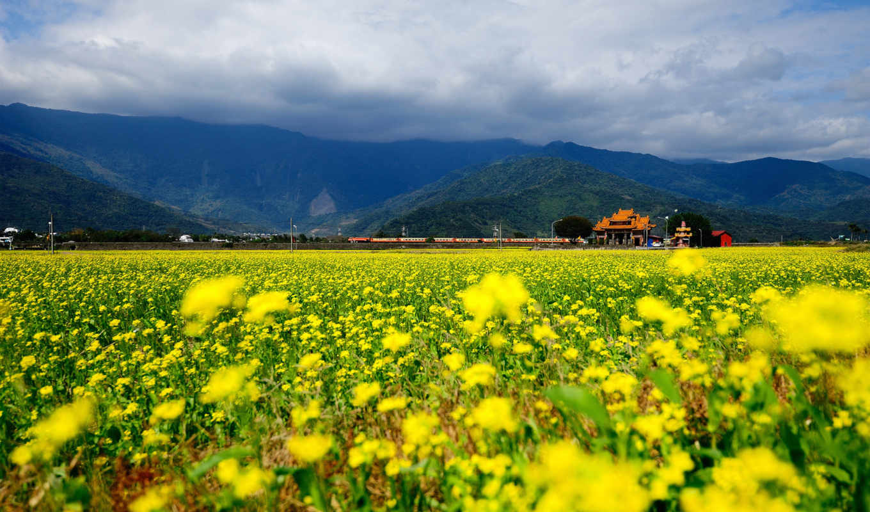 поле, цветы, поезд, горы, облака, жёлтых,