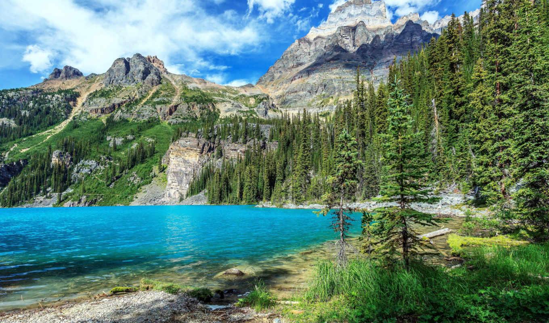 озеро, горы, голубое, канадский, national, park, лес, гор, trees, природа, yoho,