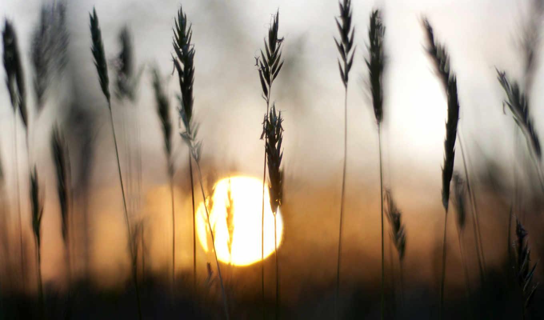 природа, сол, фото, landscape, summer, sun, stock, забор, поле, природы,