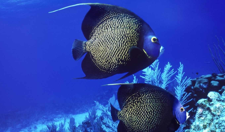 fish, pinterest, underwater, осьминог, more, www, pictures, forum,