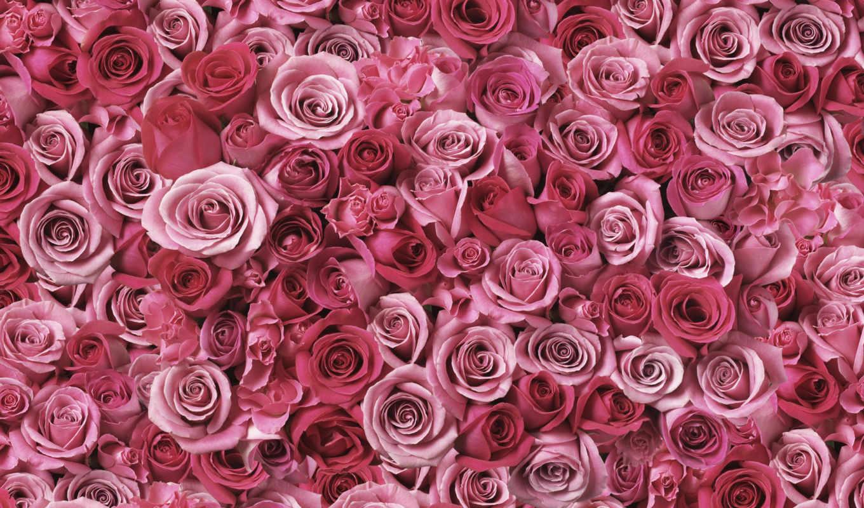 wallpapers, spirals, love, flowers, красиво, цветы, растения, wallpaper, download, hd,