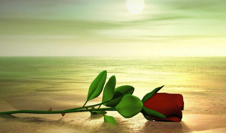 que, amor, una, del, como, imagen, rosa, sobre, imagenes,
