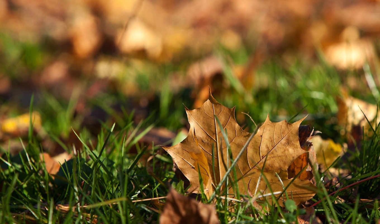 osen, листья, стихи,