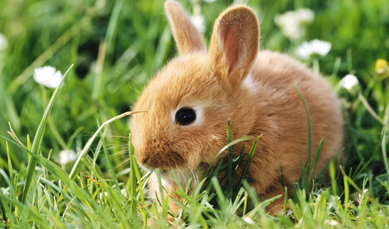 обои, кролик, зайцы, животные, фото, грызуны, крол
