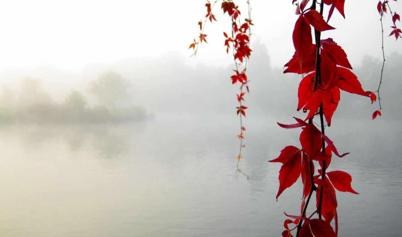 спокойствие, осень, клен, red, desktop, природа, желтые, leaf, смотрите, download, beauty, elegant, lake, line,