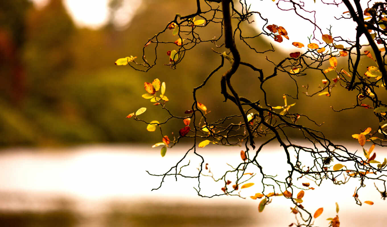 ветка, осень, листва, природа, картинка, herbst,