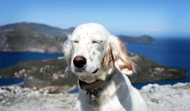 собака, собаки, eyes, друг,