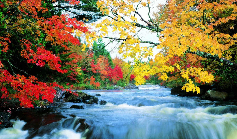 осень, природа, you, можно, картинка,