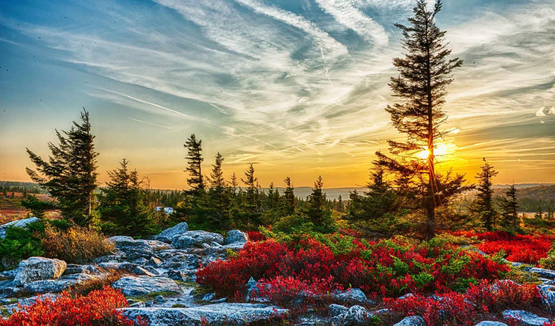 природа, usa, landscape, virginia, west, ёль, рассветы, hdr, небо, закаты, кусты,