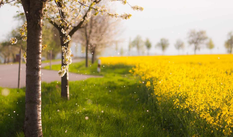 весна, природа, дерево, поле,