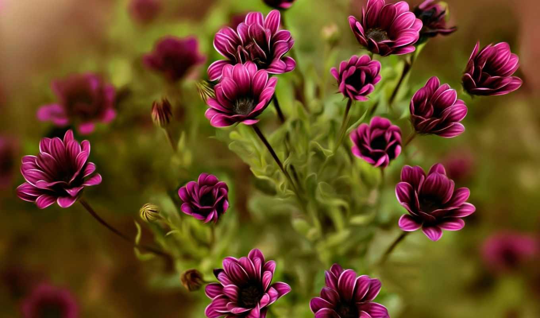коллекция, графика, цветы, темно-розовые,