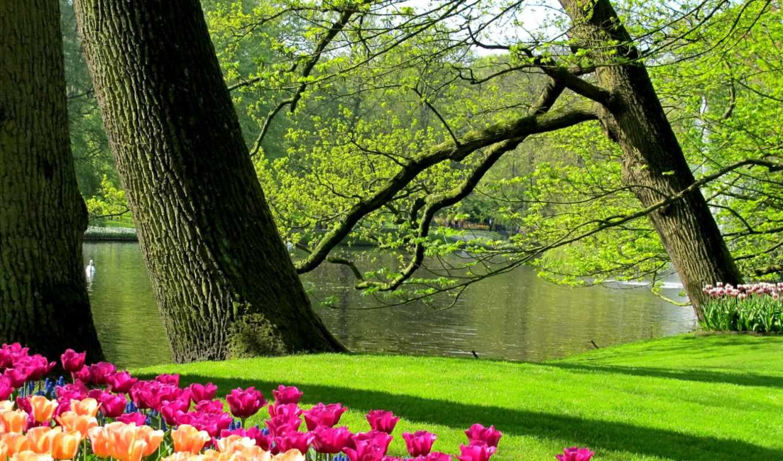 park, койкенхоф, целых, wiosna, площадью, historical, гектара, цветущих, full, тюльпанов,