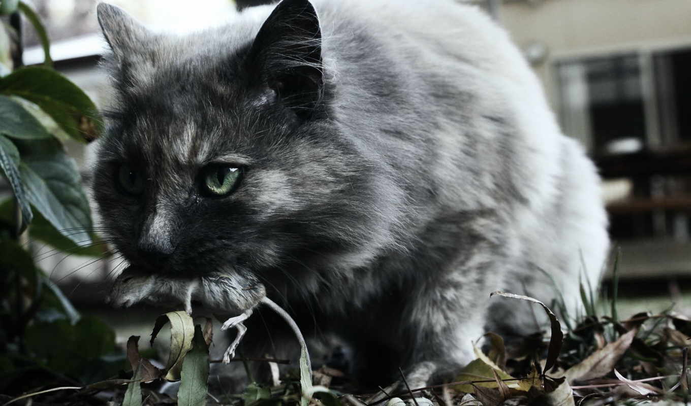кот, animal, images, free, photos, pictures,