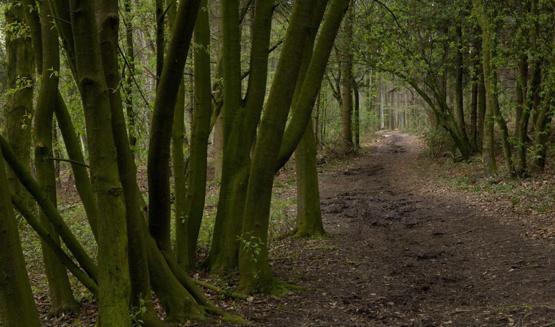 лесная, best, природа, тропа, картинка, предыдущая, следующая, fond, февраля, high, you,