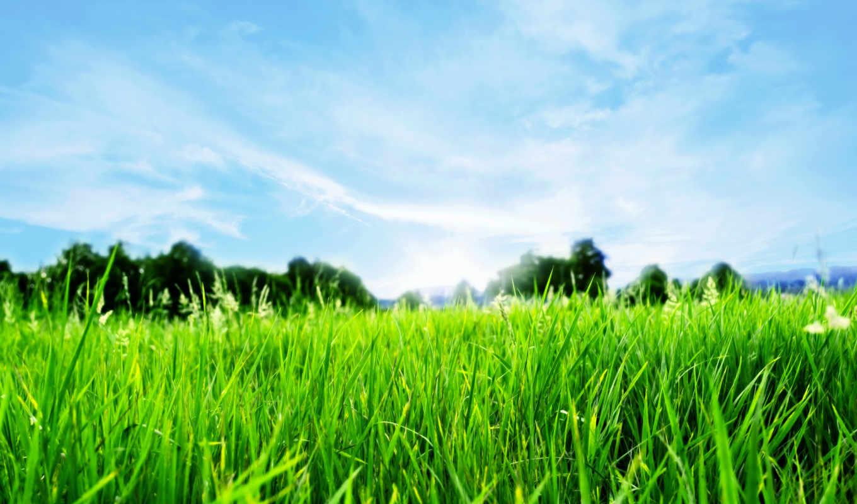 трава, весна, горизонт,