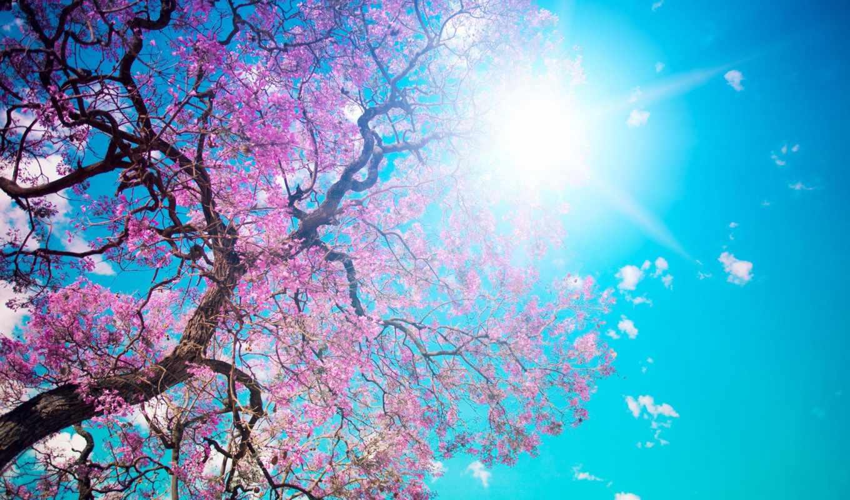весна, sun, дерево, цветение, Сакура, день, clear, цветки, голубое, небо, rays,