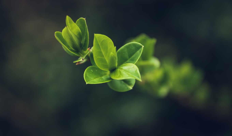 лист, makryi, plan, большой, branch, природа, free