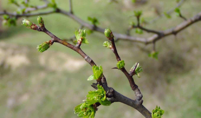 весна, ветви, весны, pomi, media, выходные, природа, الناس, ближайшие, value, primavara, сейчас, брестчину, peisaj, gallery,
