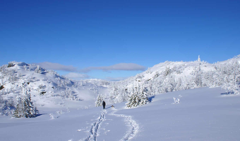 снег, winter, sun, собака, лыжник, shine, елочки,